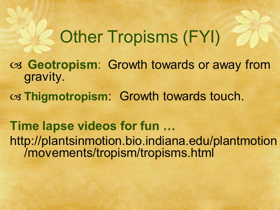 Other Tropisms (FYI) Geotropism: Growth towards or away from gravity.