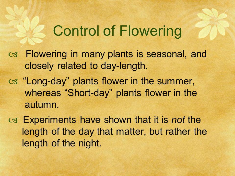 Control of Flowering Flowering in many plants is seasonal, and
