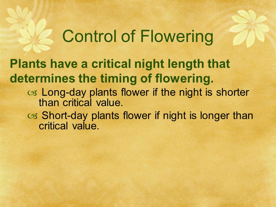Control of Flowering Plants have a critical night length that