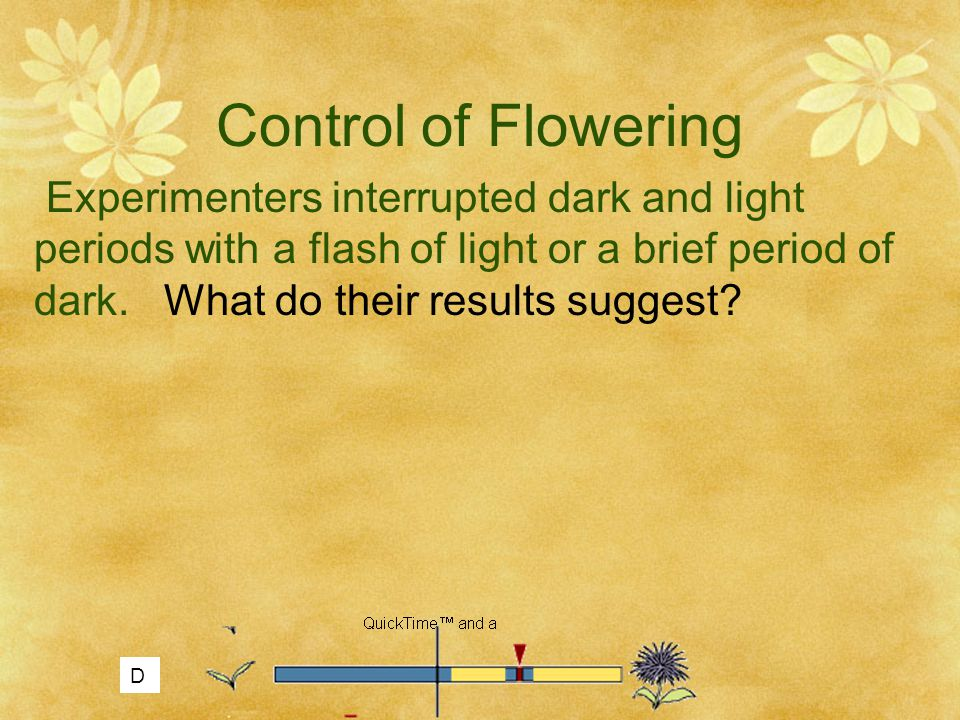 Control of Flowering Experimenters interrupted dark and light