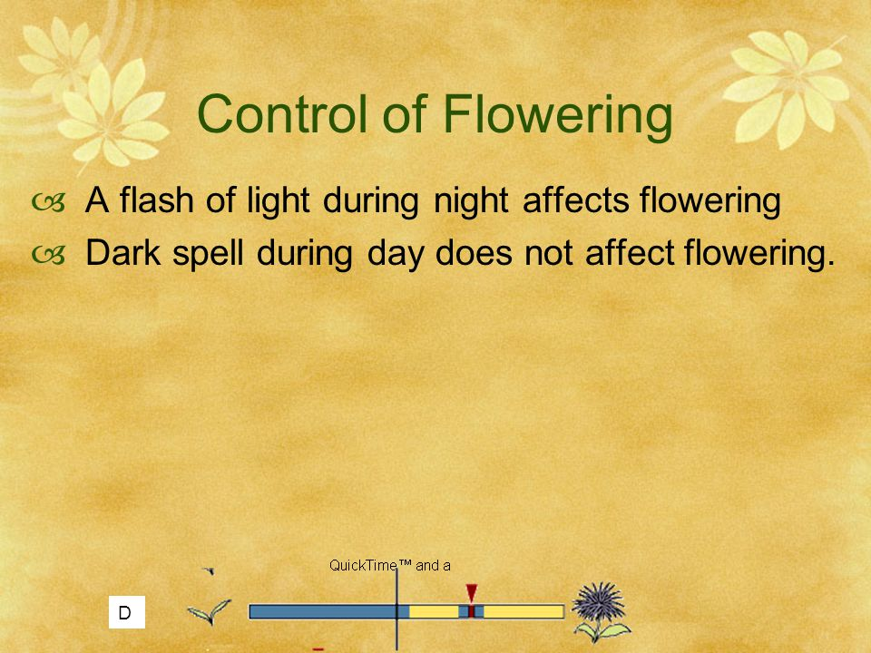Control of Flowering A flash of light during night affects flowering