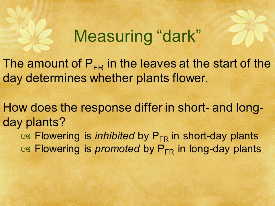 Measuring dark The amount of PFR in the leaves at the start of the