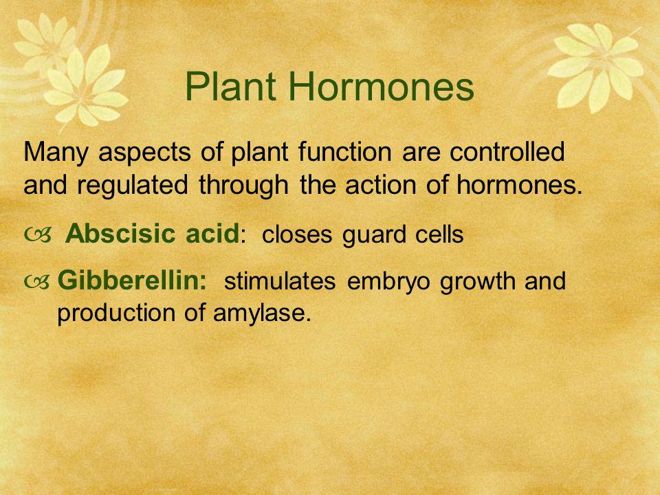 Plant Hormones Abscisic acid: closes guard cells
