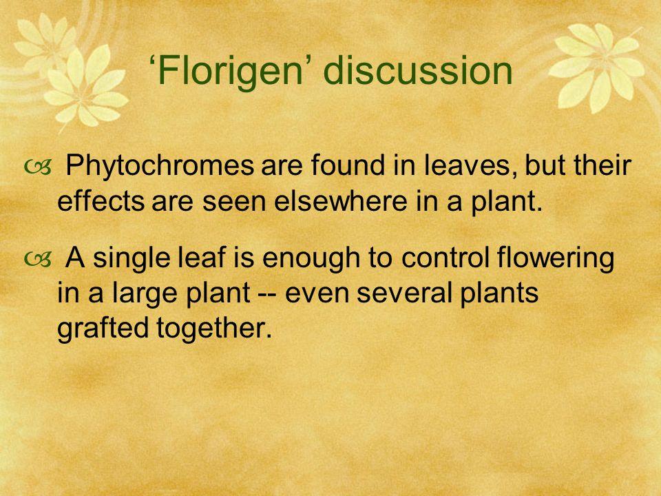 'Florigen' discussion