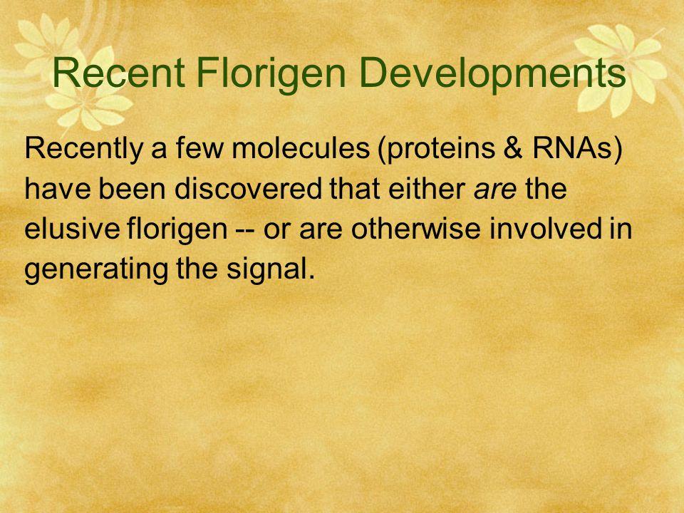 Recent Florigen Developments