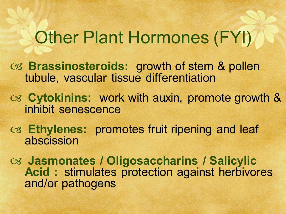 Other Plant Hormones (FYI)