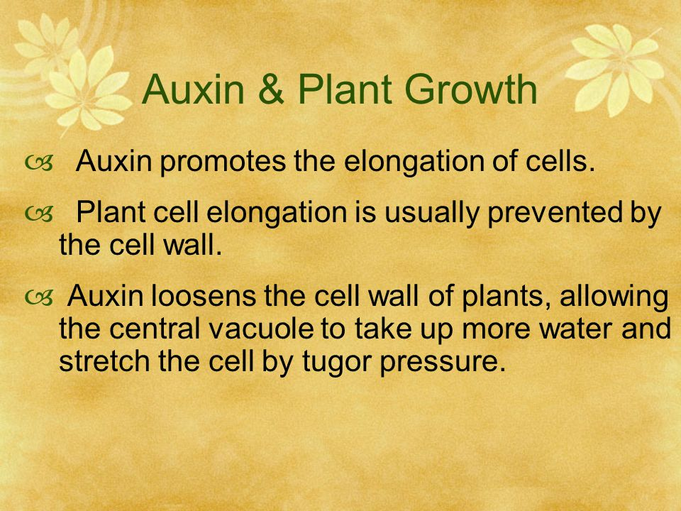 Auxin & Plant Growth Auxin promotes the elongation of cells.
