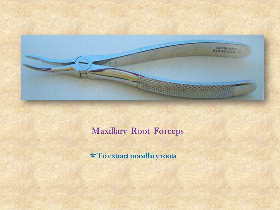 Maxillary Root Forceps
