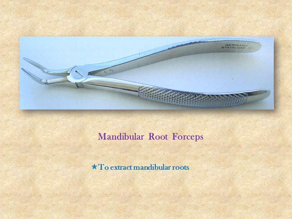 Mandibular Root Forceps