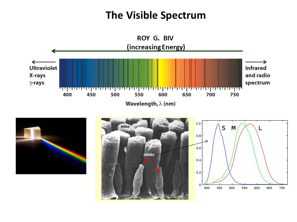 The Visible Spectrum ROY G. BIV (increasing Energy)