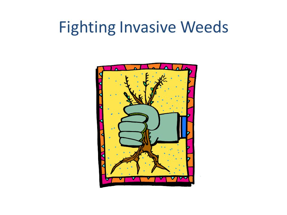 Fighting Invasive Weeds
