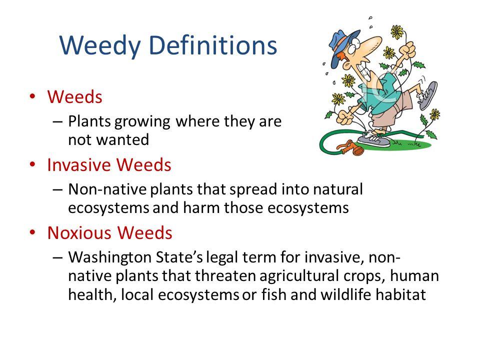 Weedy Definitions Weeds Invasive Weeds Noxious Weeds
