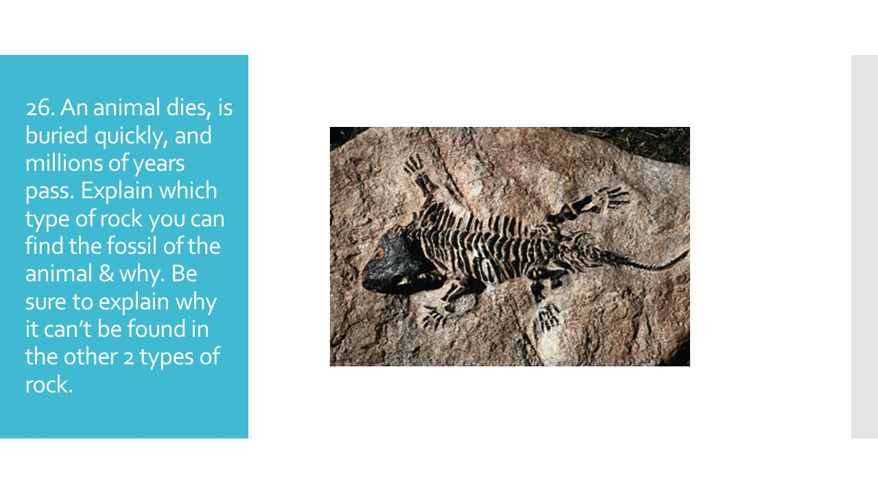 26. An animal dies, is buried quickly, and millions of years pass