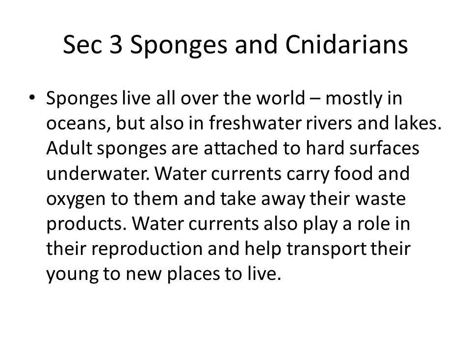 Sec 3 Sponges and Cnidarians