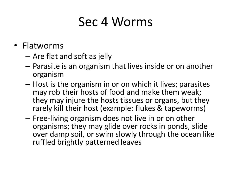 Sec 4 Worms Flatworms Are flat and soft as jelly