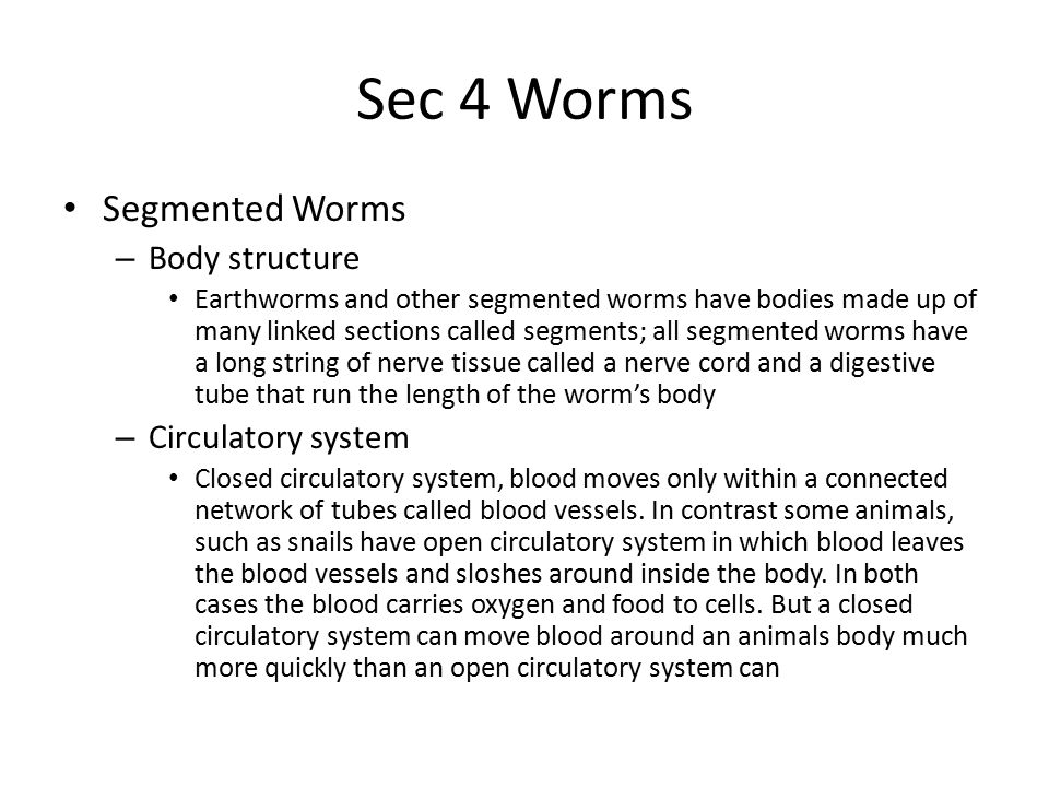 Sec 4 Worms Segmented Worms Body structure Circulatory system