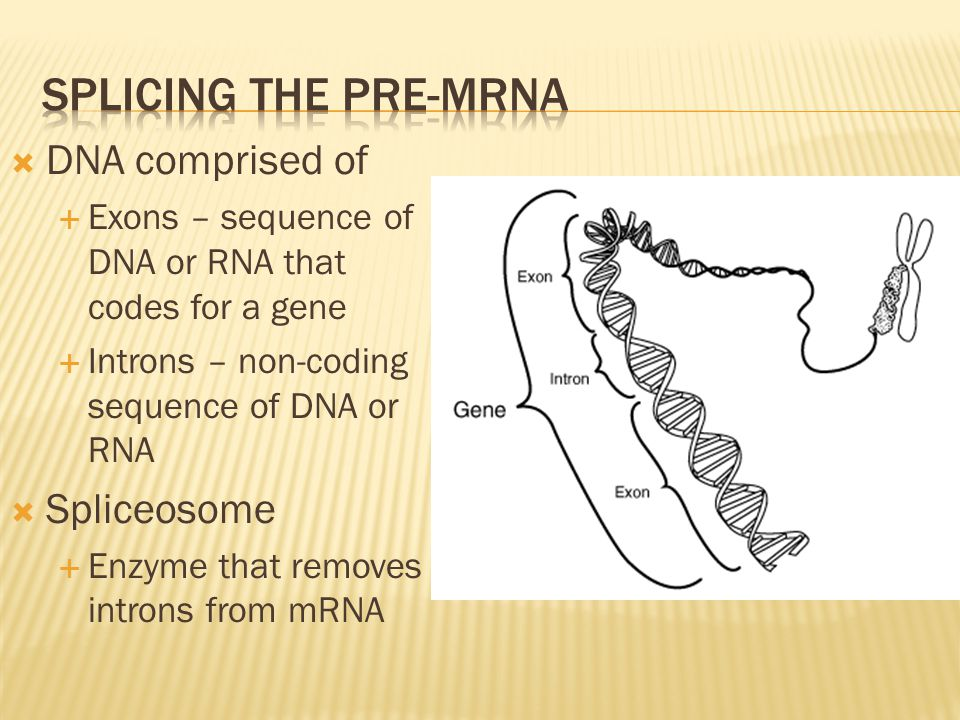 Splicing the pre-MRNa DNA comprised of Spliceosome