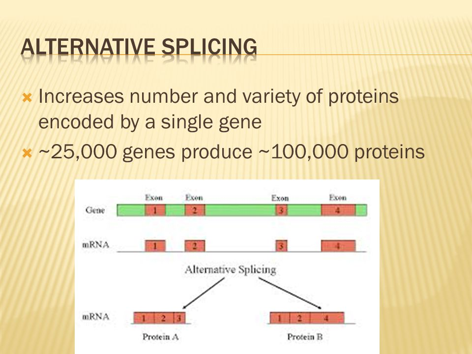 Alternative Splicing Increases number and variety of proteins encoded by a single gene.