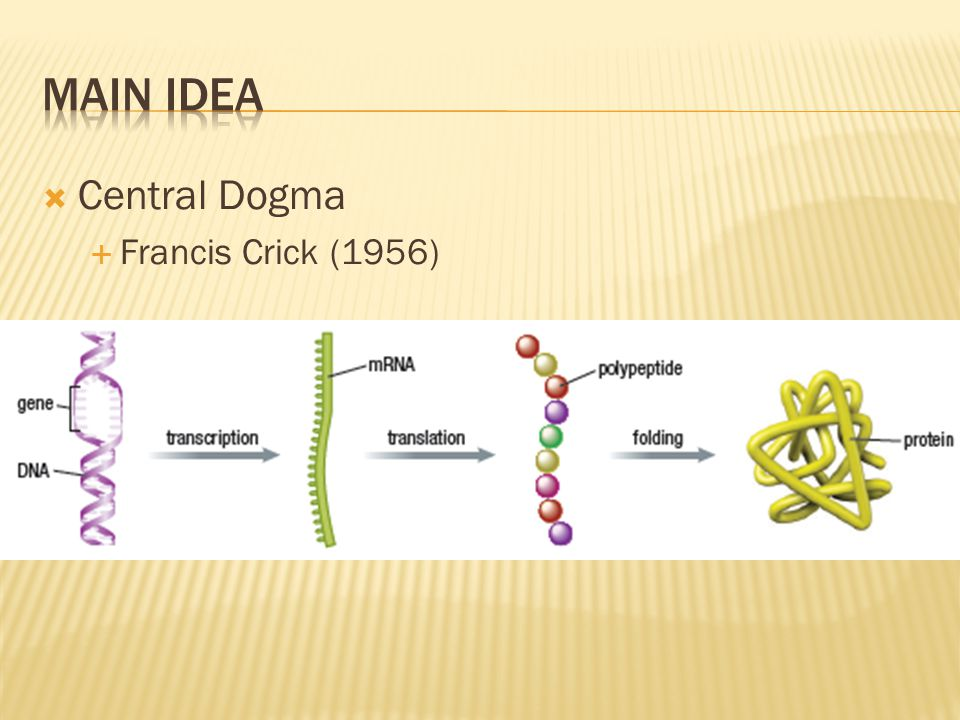 Main Idea Central Dogma Francis Crick (1956)