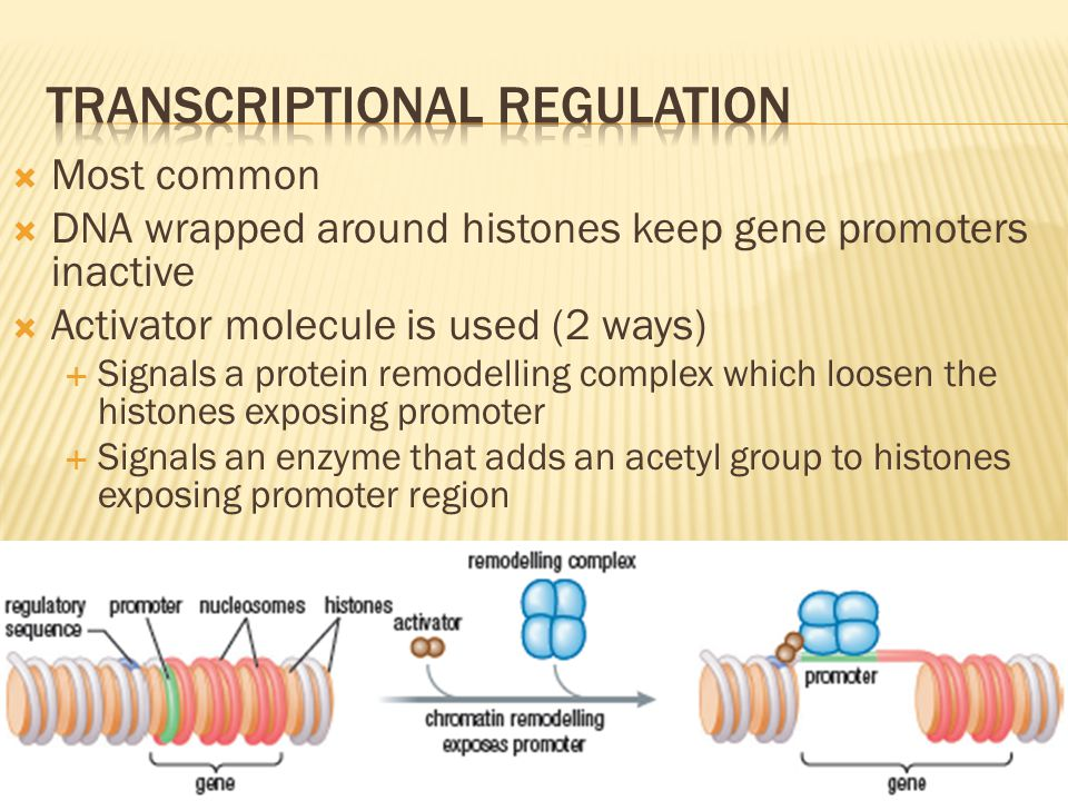 Transcriptional regulation