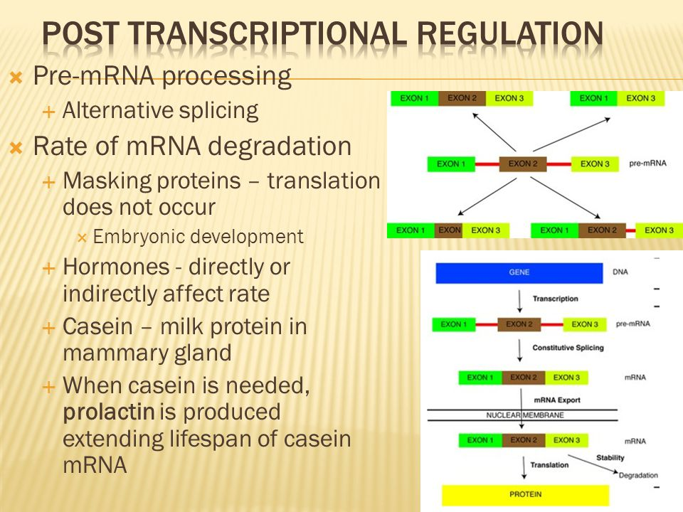 Post transcriptional regulation