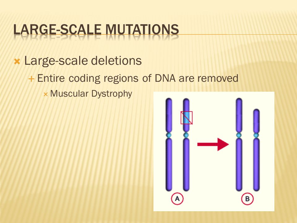 Large-scale mutations