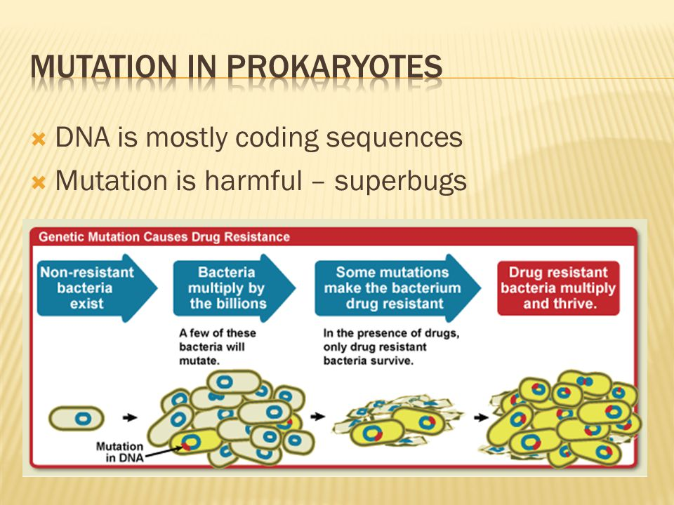 Mutation in prokaryotes