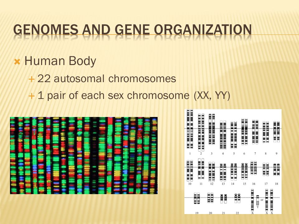 Genomes and Gene organization