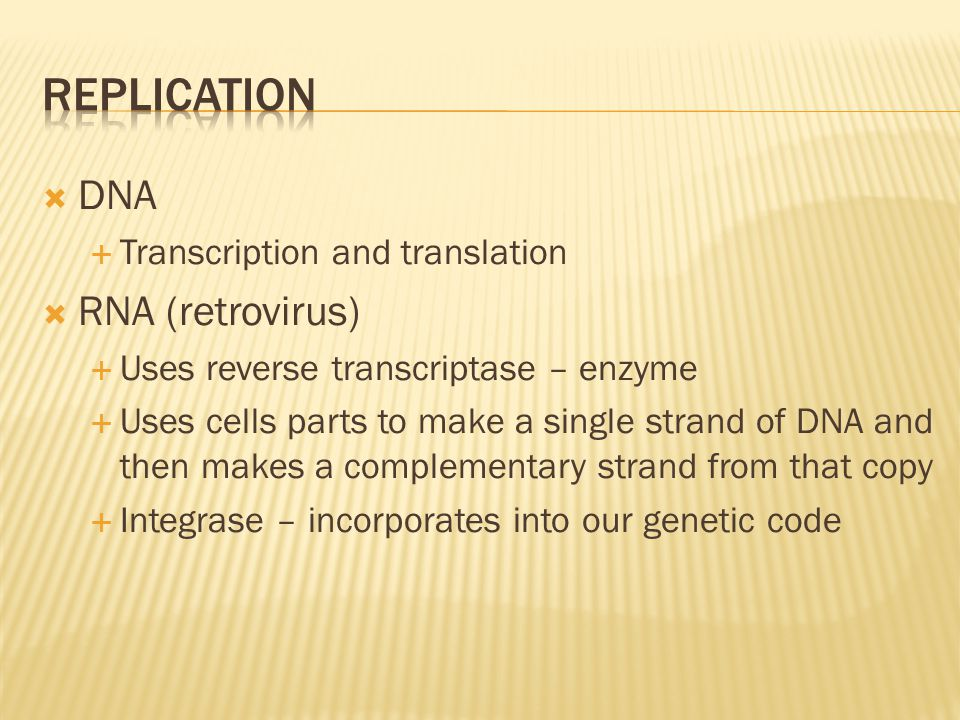 replication DNA RNA (retrovirus) Transcription and translation