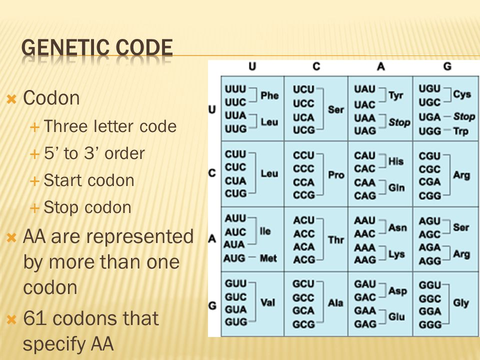 Genetic COde Codon AA are represented by more than one codon