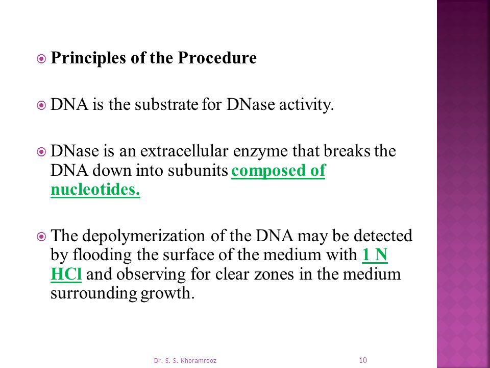 Principles of the Procedure DNA is the substrate for DNase activity.