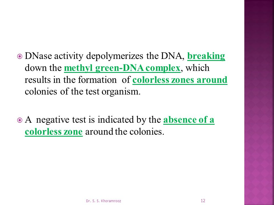DNase activity depolymerizes the DNA, breaking down the methyl green-DNA complex, which results in the formation of colorless zones around colonies of the test organism.