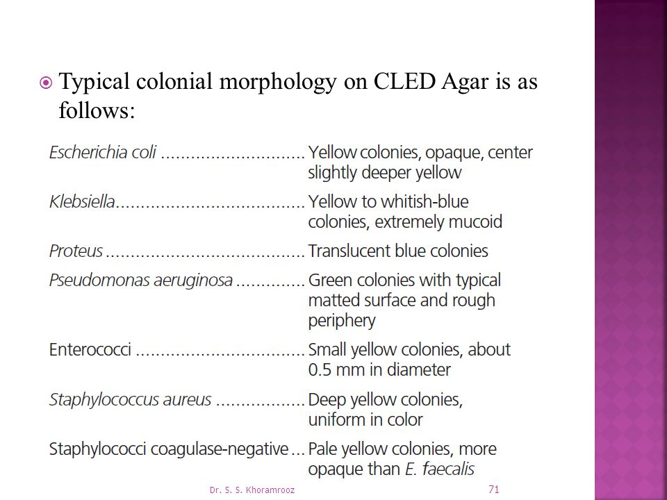 Typical colonial morphology on CLED Agar is as follows: