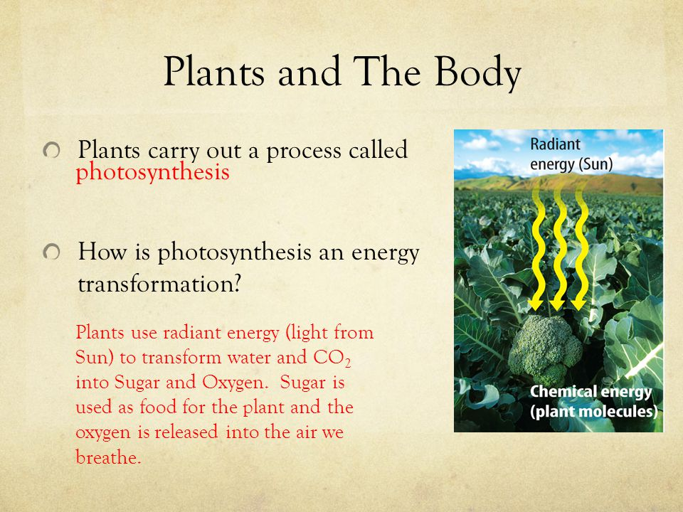 Plants and The Body Plants carry out a process called photosynthesis