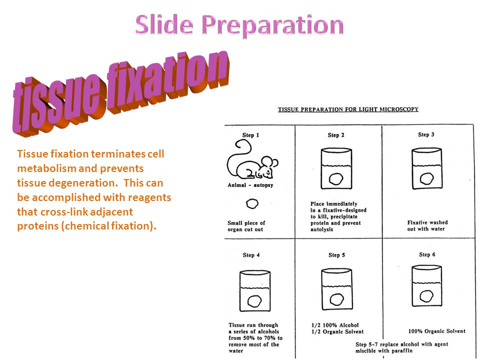 Slide Preparation tissue fixation