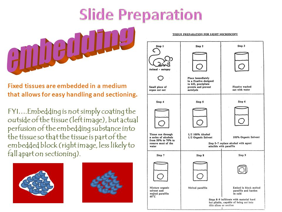 Slide Preparation embedding