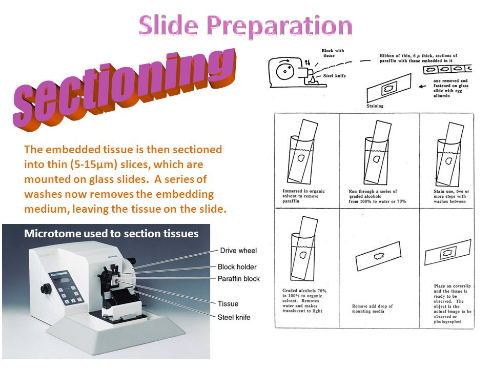 Slide Preparation sectioning