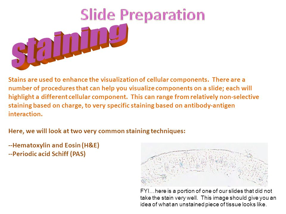 Slide Preparation staining