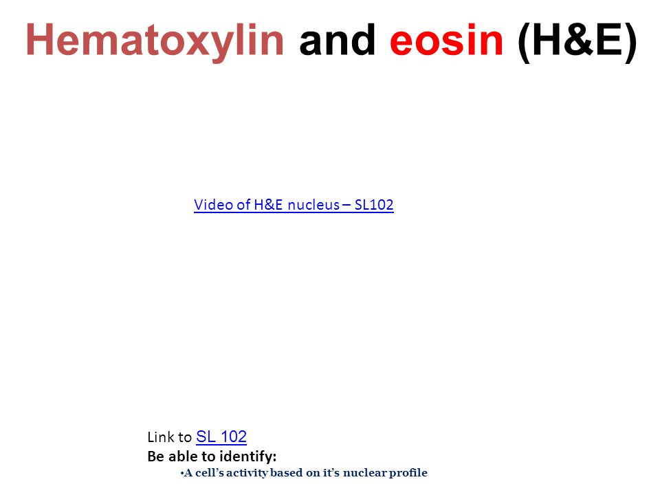 Hematoxylin and eosin (H&E)