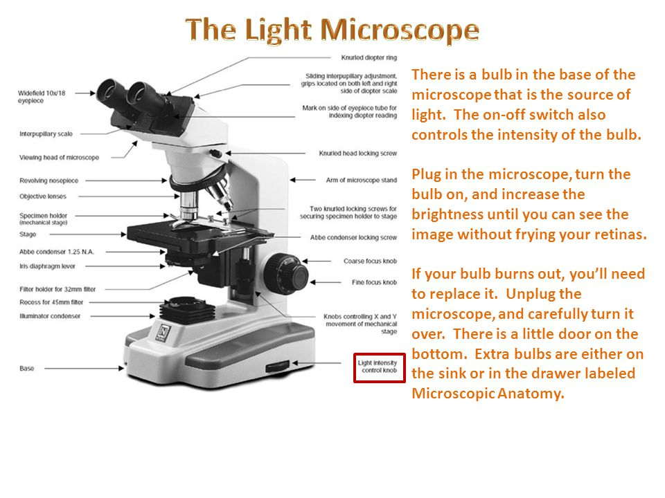 light microscope The microscope pictured above is referred to as a compound light microscope the term light refers to the method by which light transmits the image to your eye compound deals with the microscope having more than one lens microscope is the combination of two words micro meaning small and scope meaning view.