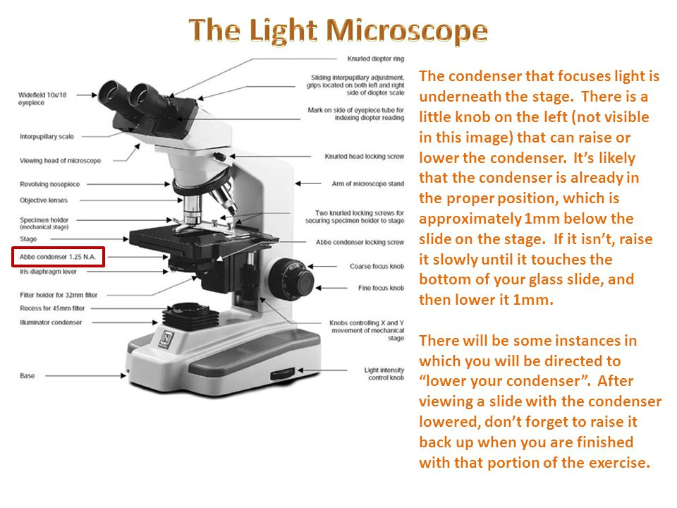 The Light Microscope