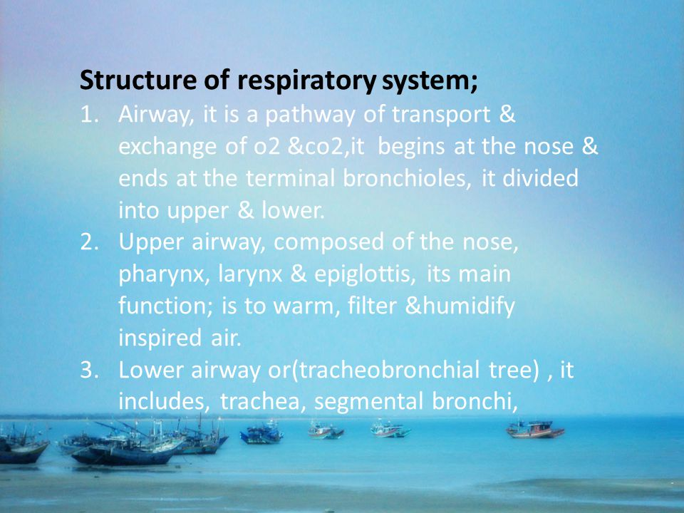 Structure of respiratory system;