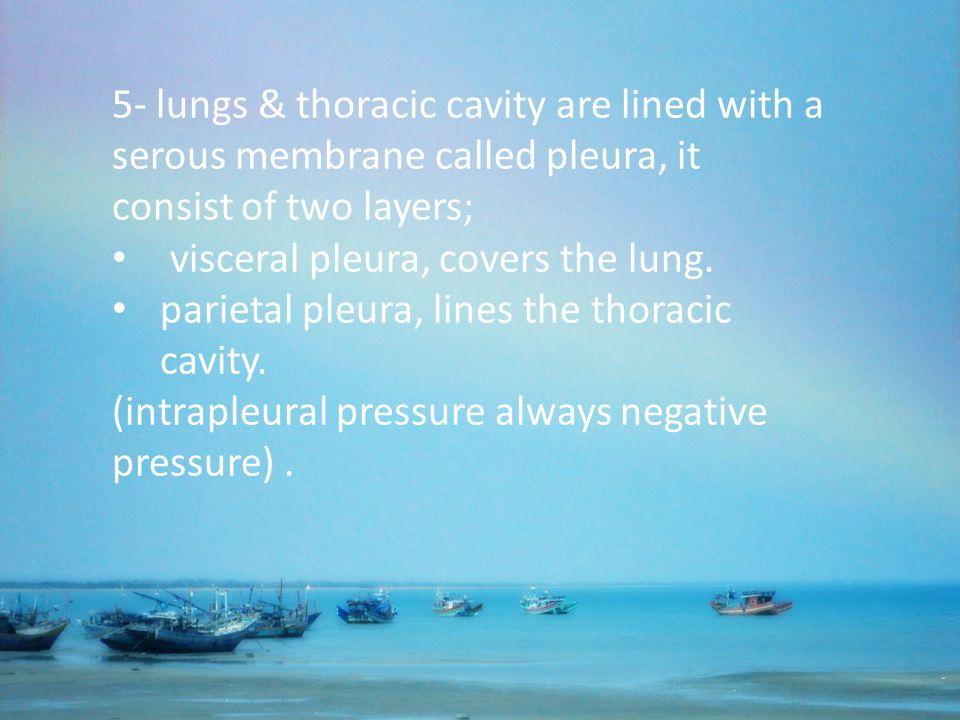 5- lungs & thoracic cavity are lined with a serous membrane called pleura, it consist of two layers;