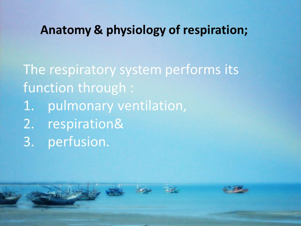 The respiratory system performs its function through :