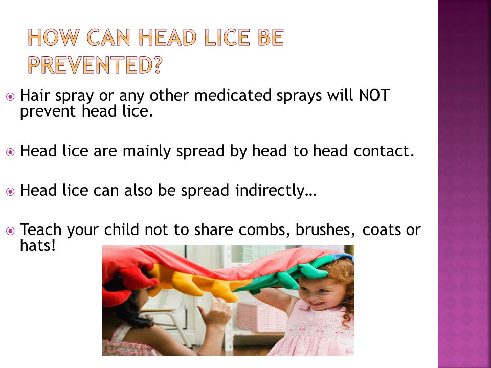 How can head lice be prevented