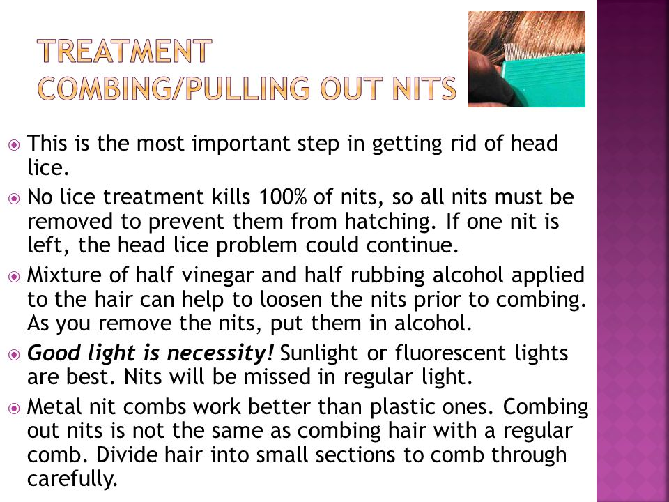 Treatment Combing/Pulling out nits