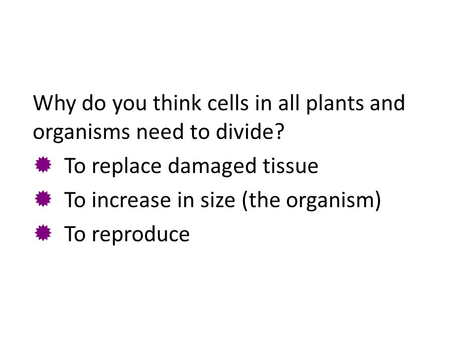Why do you think cells in all plants and organisms need to divide