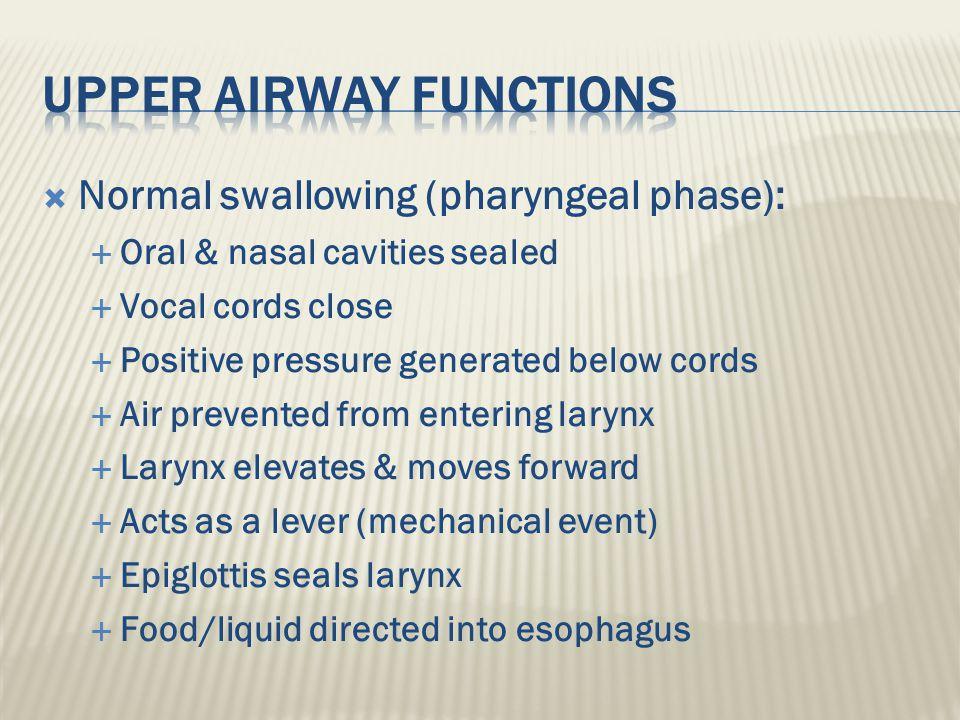 Upper airway functions