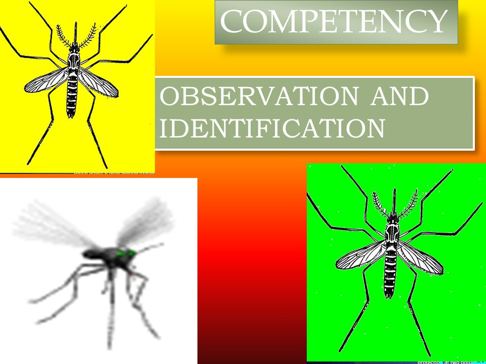 COMPETENCY OBSERVATION AND IDENTIFICATION