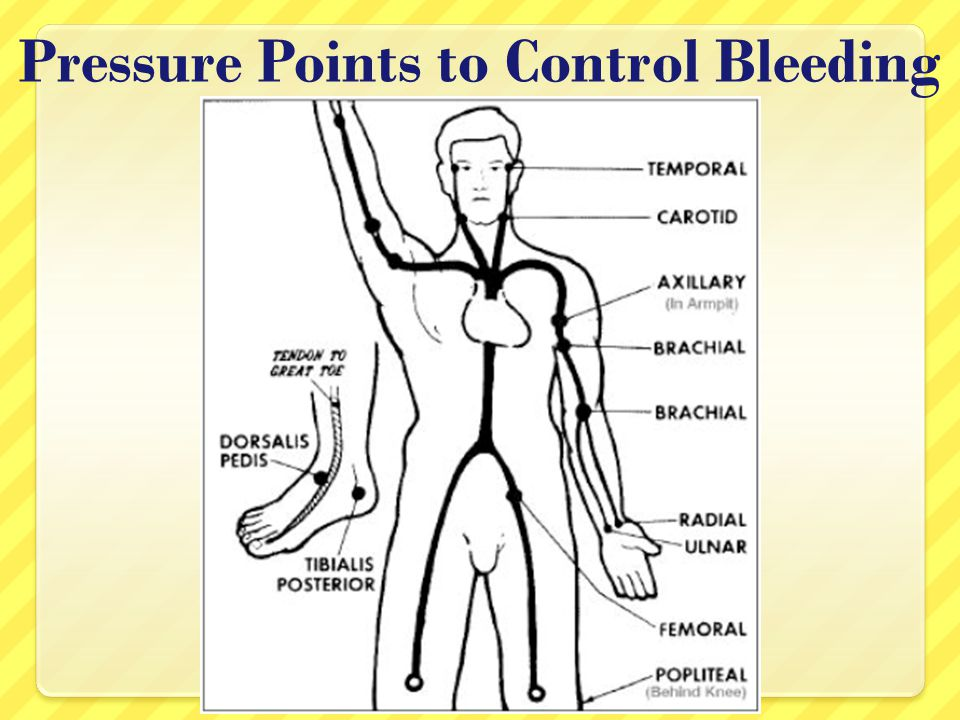 Pressure Points to Control Bleeding